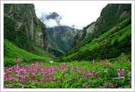 Valley of Flowers & Hemkund Sahib